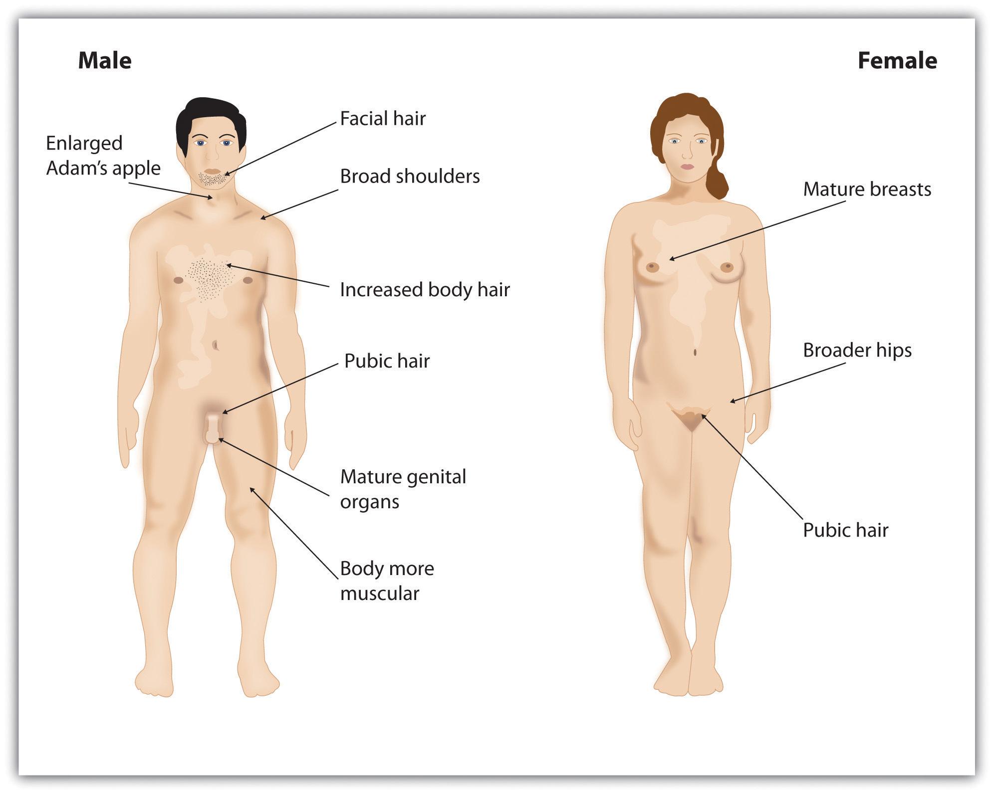 Секс в схеме психология 21 фотография