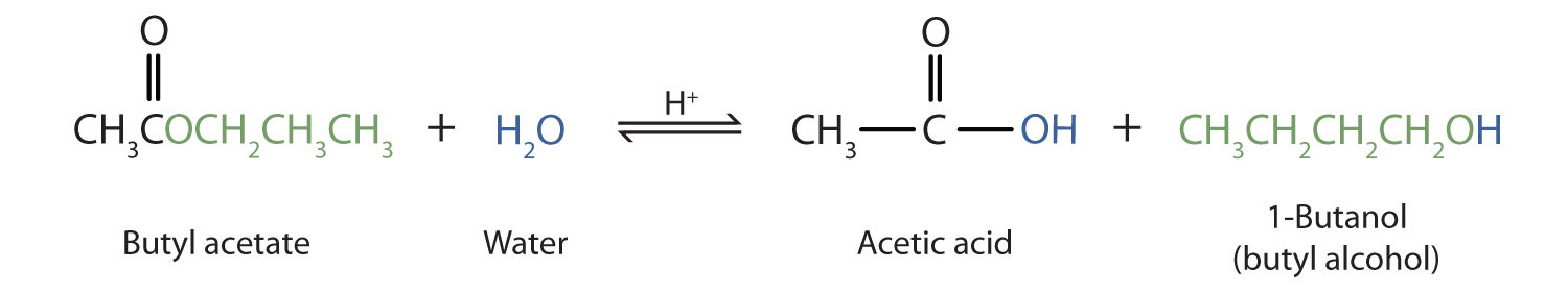 The hydrolyzation of ester Butyl acetate produces the corresponding acetic acid and 1-Butanol alcohol.
