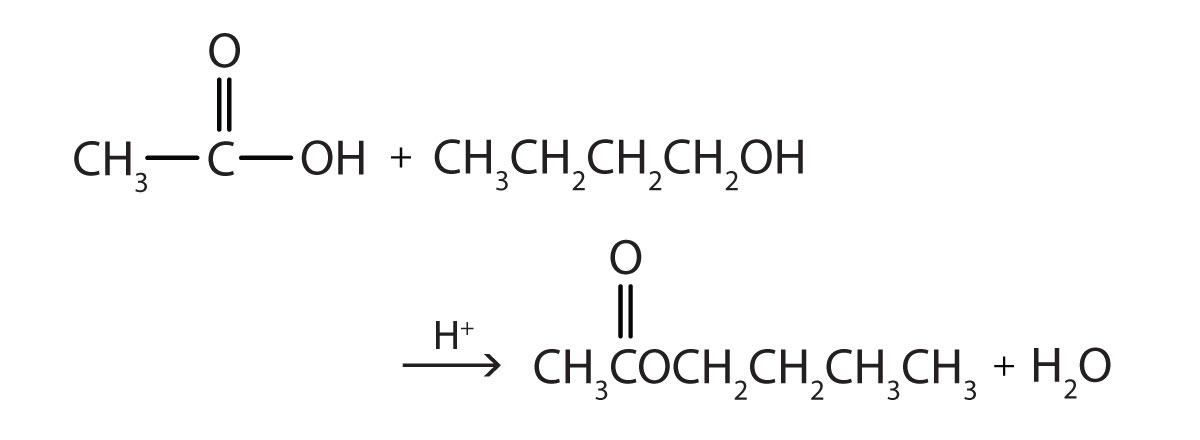 The reaction of acetic acid and butanol produces the corresponding ester Butyl acetate and water.