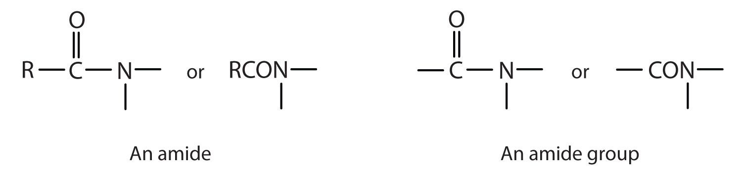 Amides are compounds that present a carbonyl group attached to a Nitrogen from Ammonia or an Amine.