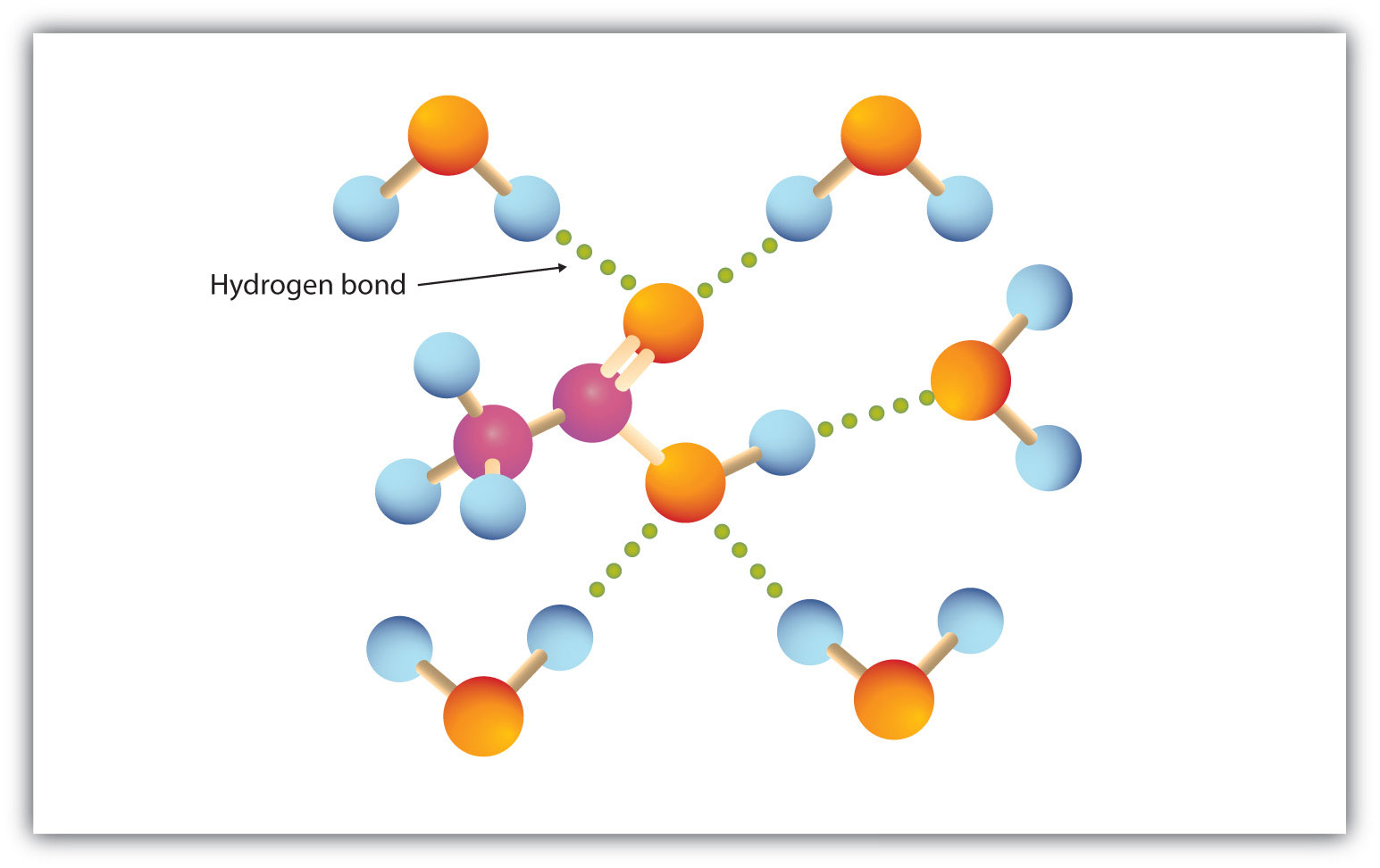 Ball-and-Stick model of Hydrogen bonding between Oxygen attached to Carbon by double bonds in the Carboxyl group and Hydrogen from surrounding water.