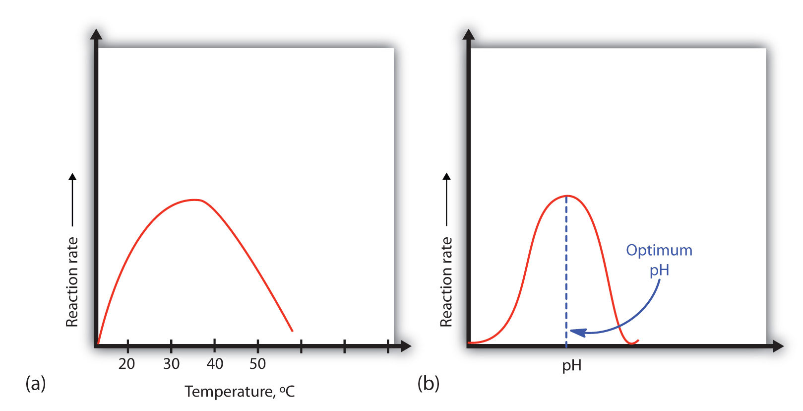 an analysis of enzyme effect on biochemical reaction To overcome this limitation, we present and discuss a simple thermokinetic treatment of the michaelis−menten model for the enzyme-catalyzed reaction the effect of temperature on the enzyme-catalyzed reaction: insights from thermodynamics - journal of chemical education (acs publications).