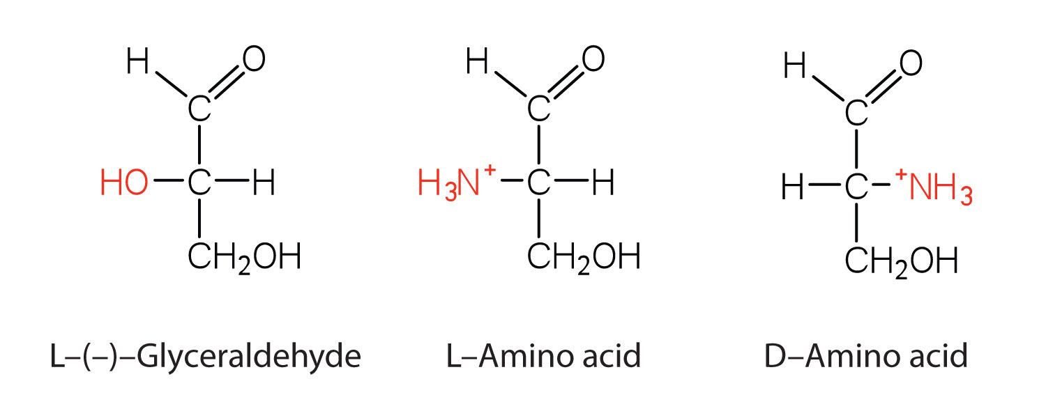 amino acids proteins and enzymes