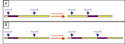 Which describes the correct pairing of DNA bases? - Brainly.com