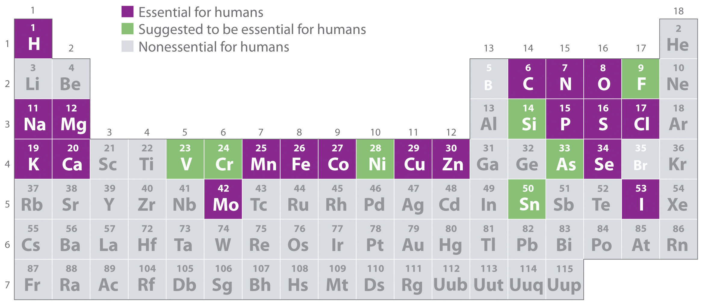 18 essential elements for life