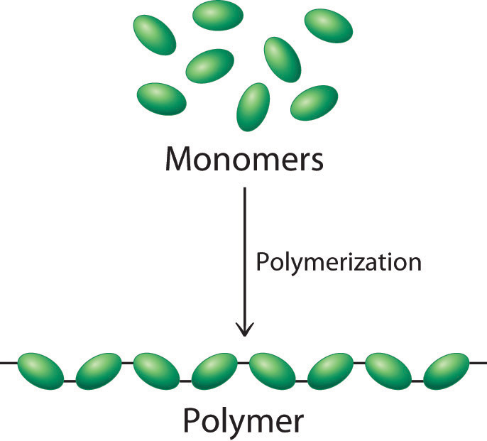 what is a polymer Polymer basics let's start at the beginning if you don't know what a polymer even is, you're in the right placeclick on a link to learn about polymers -- what they're made of, why they're different, and what makes them, well, polymers.