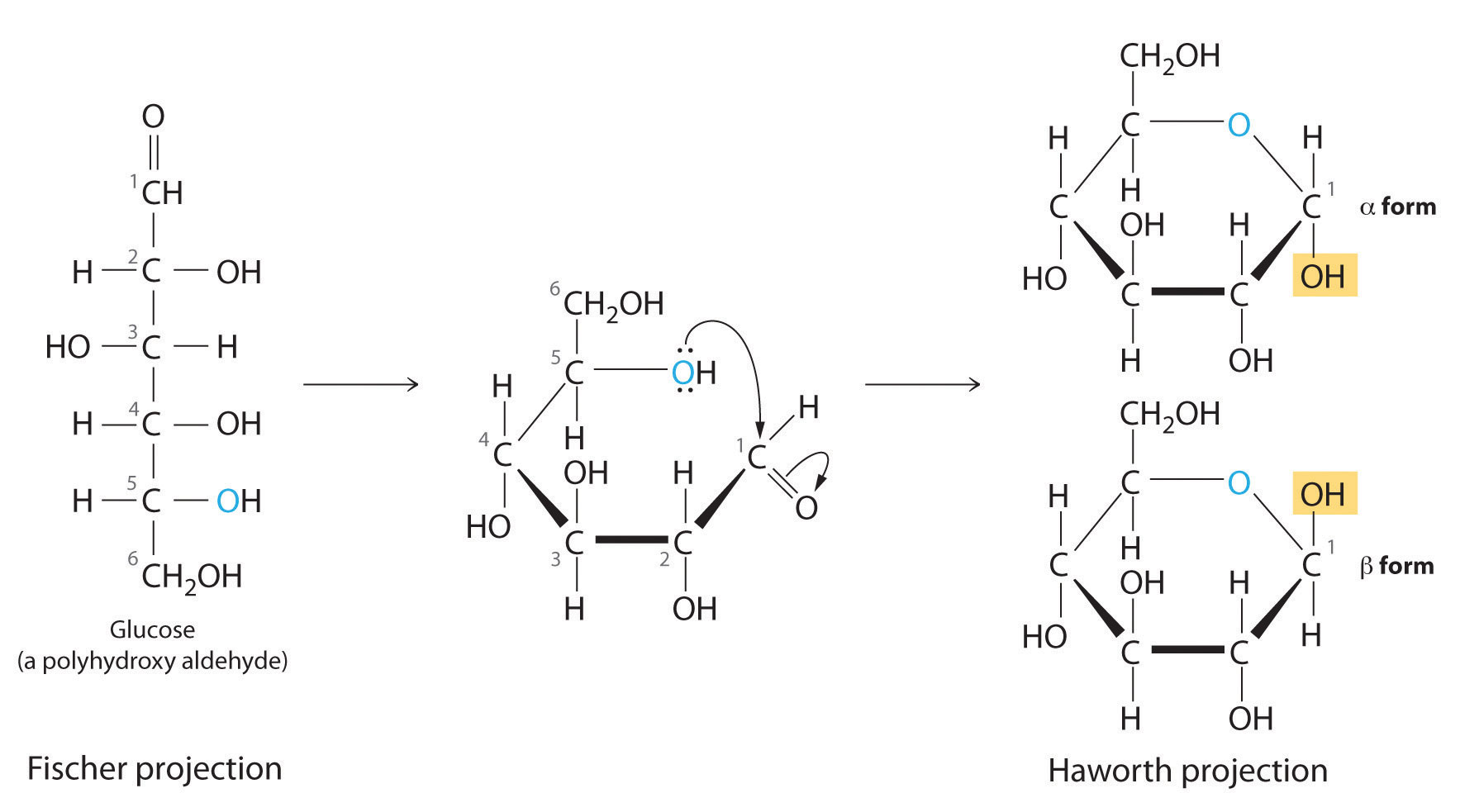 fischer projection of d fructose D-fructose is the sweetest monosaccharide how does the fischer projection of d-fructose differ from that of d-glucose.
