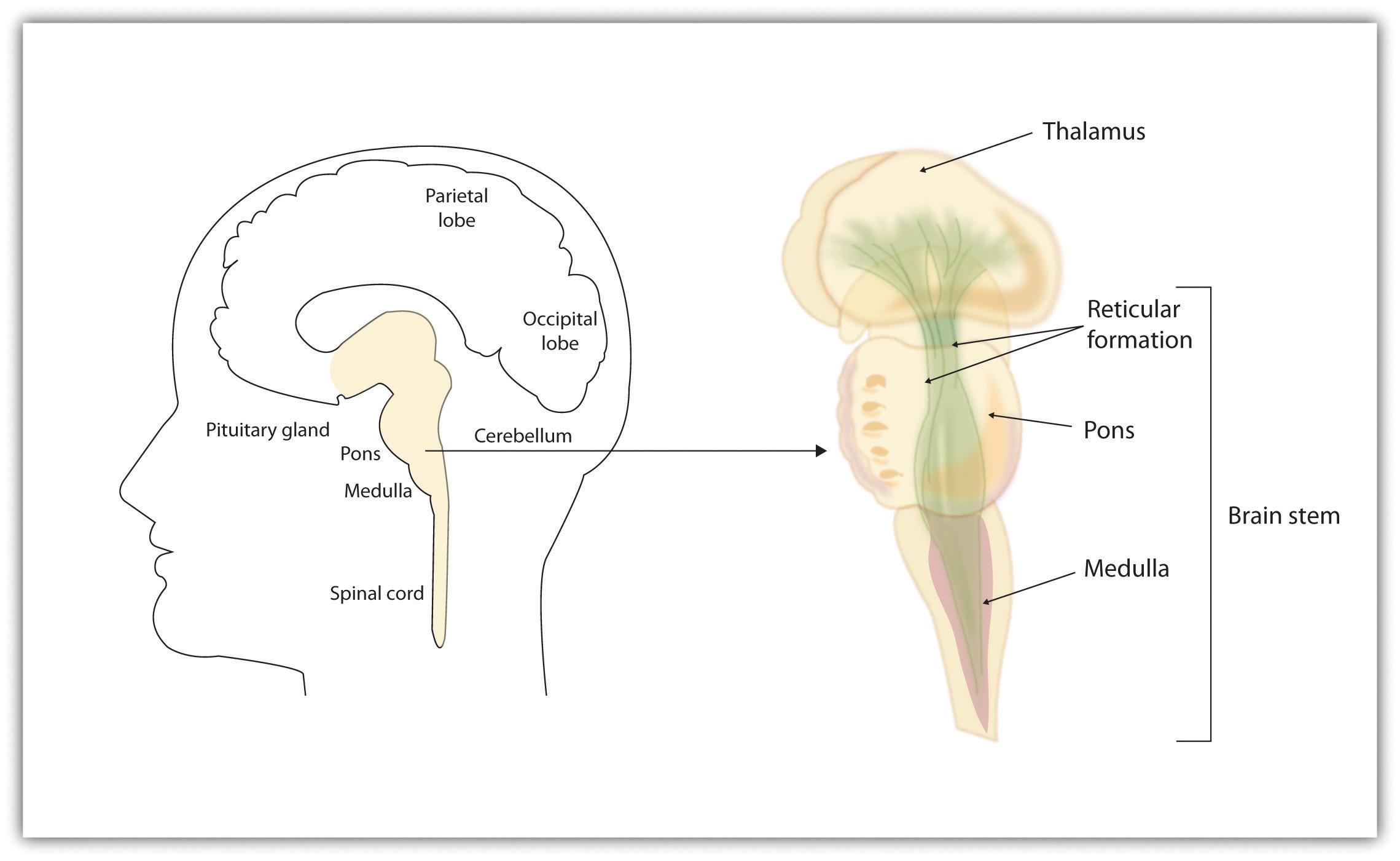 Brains, Bodies, and Behavior