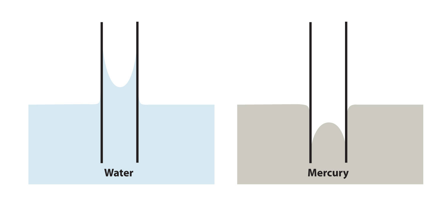 Diagram of capillary action of water and mercury.