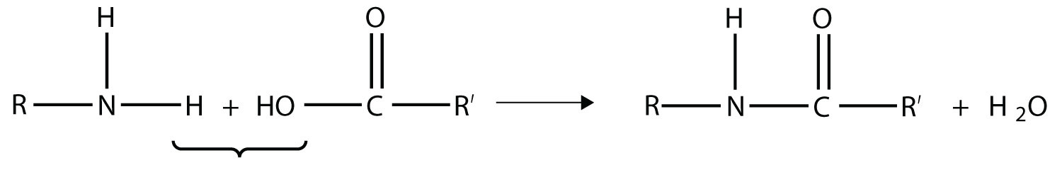 The amide bond formation is an example of polymerization.