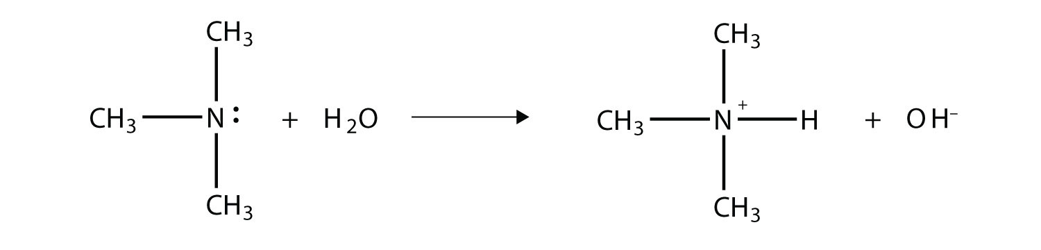 Amines act as Bronsted-Lowry bases (proton aceptors).