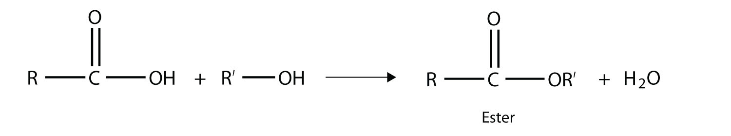 The reaction between an organic acid and an alcohol produces an ester.