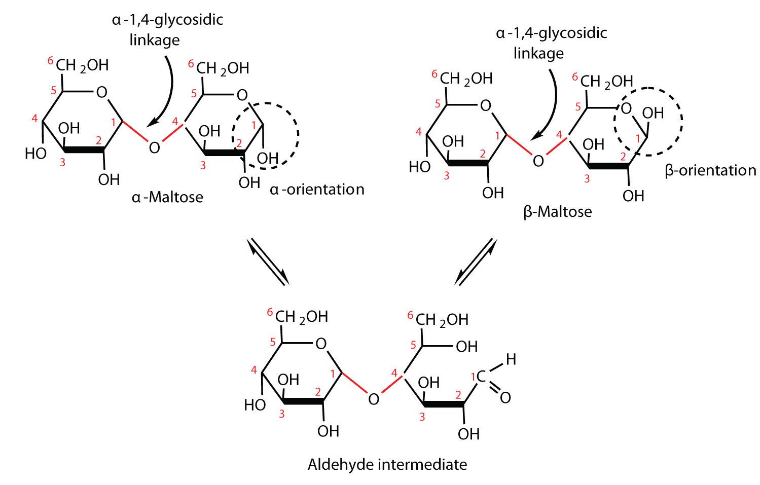 Carbohydrates maltose pooptronica