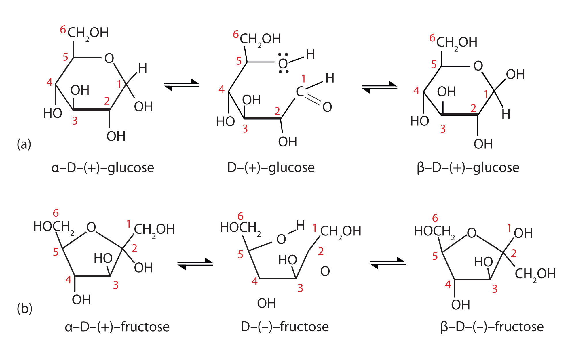 cyclic structures of monosaccharides