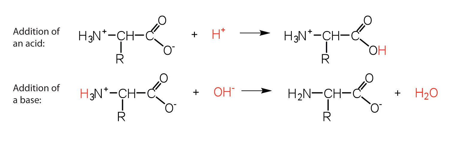 Reactions of amino acids example 1 altavistaventures