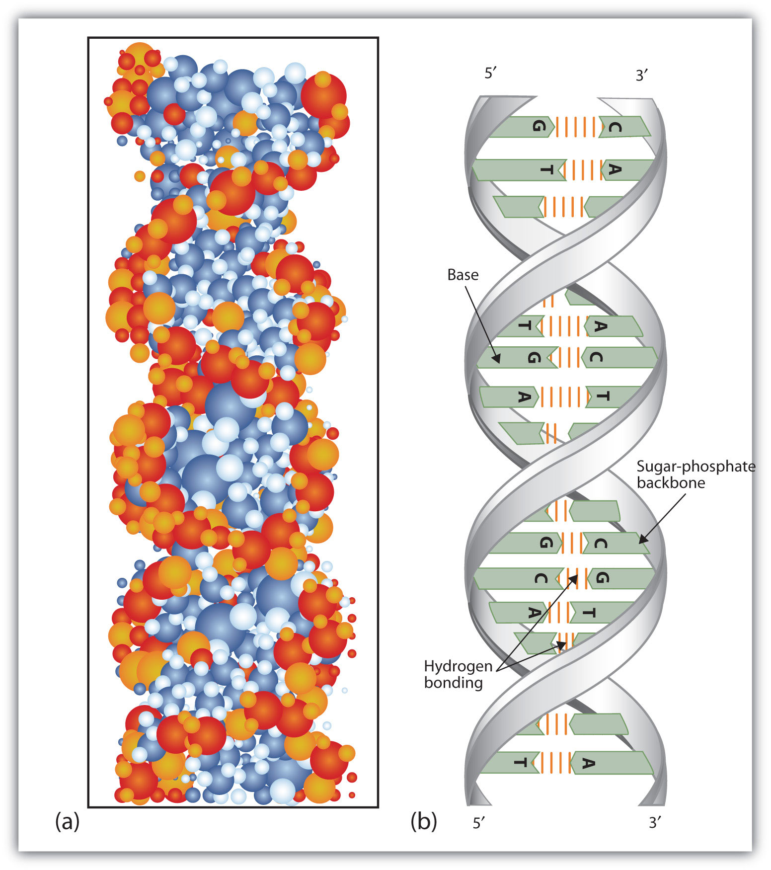 secondary structure of dna