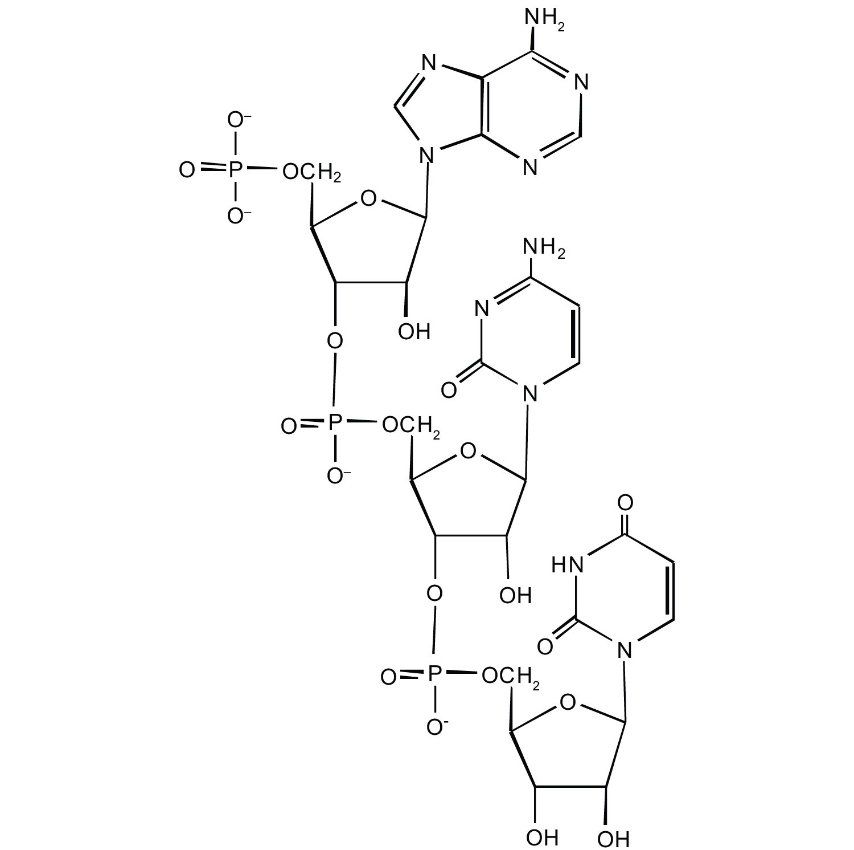 Nucleic acids exercises malvernweather Choice Image