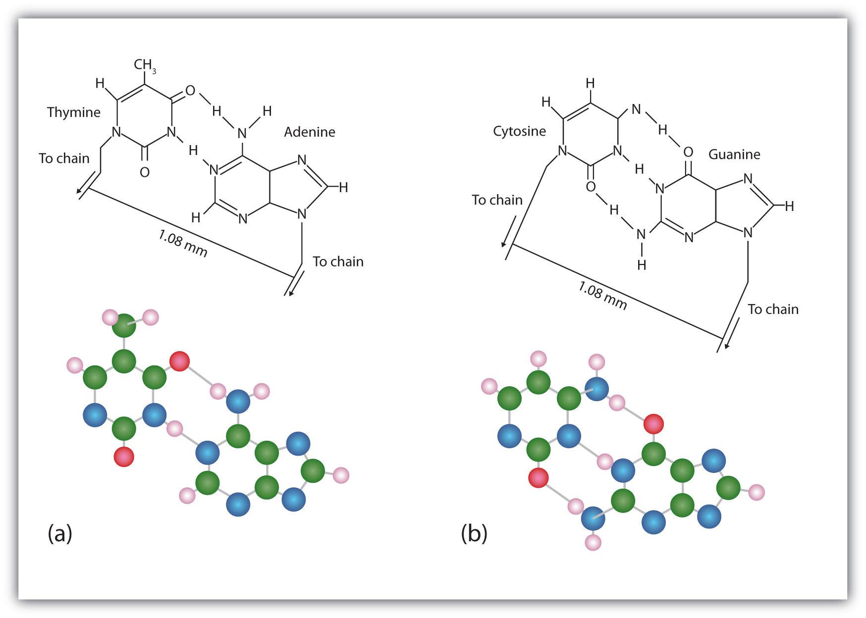 Nucleic acid structure ccuart Images